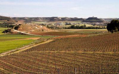 Ribera del Duero, región recomendada para visitar según The Washington Post